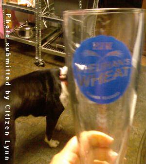 PJ's Wheat and Dog